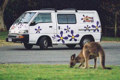 Kängurus erleben mit dem Camper Drift von Hippie Camper Australien